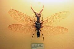 昆虫标本 库存图片