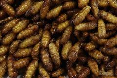 昆虫油煎了,酥脆桑蚕,普遍的昆虫快餐便宜地高蛋白在泰国低脂肪街的食物和许多亚洲国家 免版税图库摄影