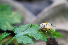 在绿色叶子的昆虫 库存图片