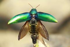 昆虫生理  免版税库存图片