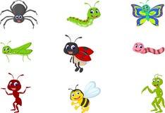 昆虫的收集 免版税库存图片