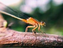 昆虫的特写镜头 免版税库存照片