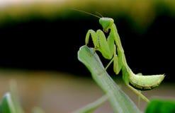昆虫的精神 免版税库存照片