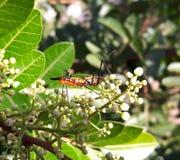 昆虫美丽在橙色,黑白颜色 免版税库存照片