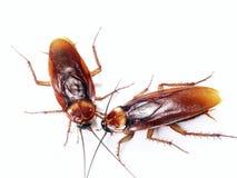 昆虫联络。 库存照片