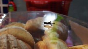 昆虫蟋蟀 免版税库存图片