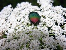 昆虫详细资料 免版税图库摄影
