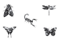 昆虫象集合蝴蝶飞蛾蝎子蜻蜓 库存照片