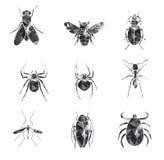 昆虫象集合 免版税库存照片