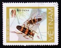 昆虫长的垫铁甲虫臭虫, 20枚硬币,大约1981年 免版税库存照片