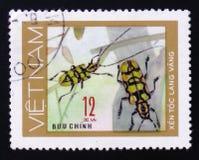 昆虫长的垫铁甲虫臭虫, 12枚硬币,大约1981年 免版税库存照片