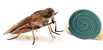昆虫防治 免版税图库摄影