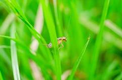 昆虫风行特写镜头草甸叶子的 图库摄影