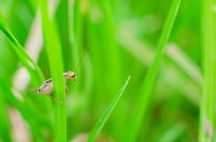 昆虫风行特写镜头草甸叶子的 免版税库存图片