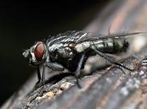 昆虫飞行 库存照片