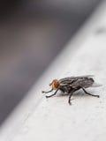 昆虫飞行 免版税库存图片
