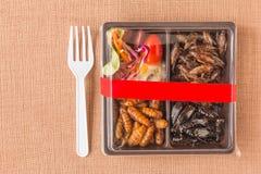 昆虫食物汇集 图库摄影