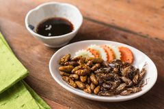 昆虫食物汇集 库存照片