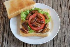 昆虫食物 与油煎的桑蚕蛹的三明治 免版税库存图片
