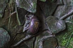 昆虫,花,哺乳动物鸟的元素在老入口门的对圣洁家庭的寺庙 免版税图库摄影