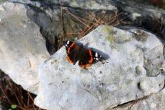 昆虫-小无脊椎节肢动物 免版税库存图片