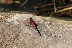 昆虫-小无脊椎节肢动物 免版税库存照片