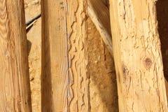 昆虫攻击毁坏的建筑木粱 免版税库存照片