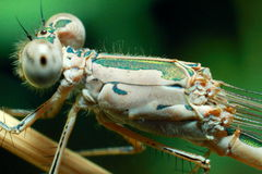 昆虫蜻蜓 图库摄影