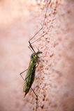 昆虫 免版税库存图片