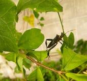 昆虫 图库摄影