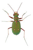 昆虫 库存图片