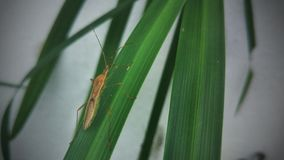 昆虫 免版税库存照片