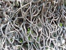 昌迪加尔,印度假山花园  免版税库存图片