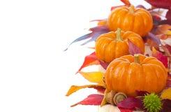 明亮和五颜六色的感恩或万圣夜,下跌在线或行的微型南瓜与在白色背景的秋天叶子 免版税库存图片