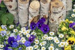 明亮地开花的夏天在草坪或草甸,土气样式开花 免版税库存照片