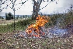 明亮地燃烧的火在秋天森林里 免版税库存图片