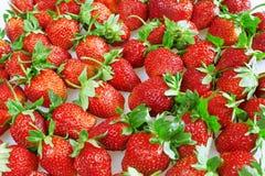 明亮地红色水多和成熟草莓 库存图片