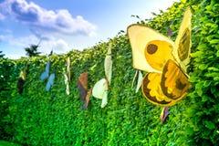 明亮地绿色从灌木,与美丽,五颜六色的蝴蝶的被剪的树篱夏天场面  免版税库存照片