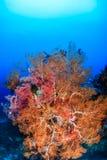 明亮地色的海底扇 库存照片
