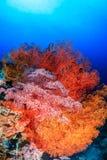 明亮地色的海底扇 库存图片
