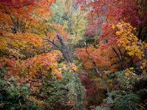 明亮地色的秋叶深森林  库存图片