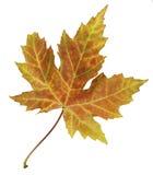 明亮地色的秋天叶子特写镜头隔绝了五颜六色在白色背景 免版税库存图片