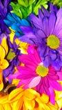 明亮地色的雏菊花束填装的图片 免版税库存图片