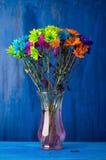 明亮地色的雏菊 免版税库存照片