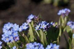 明亮地蓝色颜色美丽的花  免版税库存照片