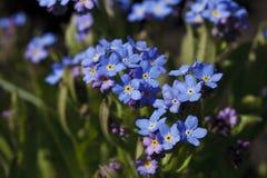 明亮地蓝色颜色美丽的花  免版税库存图片