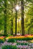 明亮地被点燃的森林在Keukenhof庭院,阿姆斯特丹射击了 免版税库存照片