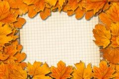 明亮的下落的秋叶 库存图片