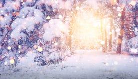 明亮的不可思议的焕发在圣诞节森林冬天背景中 发光的雪花在多雪的树和雪落 库存图片