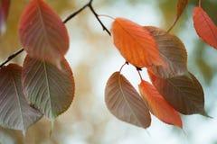 明亮的五颜六色的叶子宏指令视图 秋天公园场面 软绵绵地集中 浅深度的域 免版税库存照片